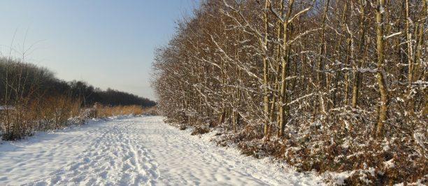 Wandelen in de bossen van Beetsterzwaag